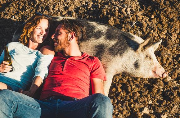 אף קצר, פרווה עם כתמים ומזג נוח. חזיר (ובני אדם) מציגים את סינדרום הביות | Shutterstock