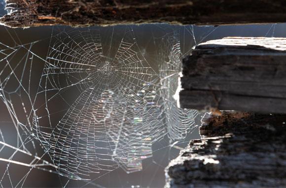 רשת נטושה | צילום: Shutterstock