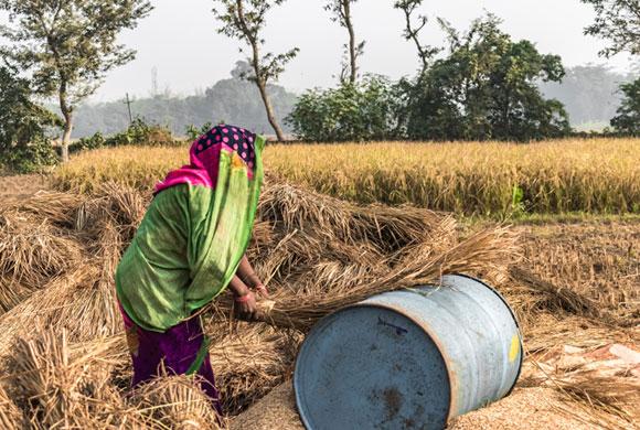 אישה הודית עובדת בשדה כשפחת חוב | Ashish_wassup6730, SPL