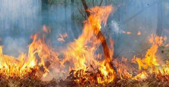 שריפת יער באמזונס | צילום: Toa55, Shutterstock