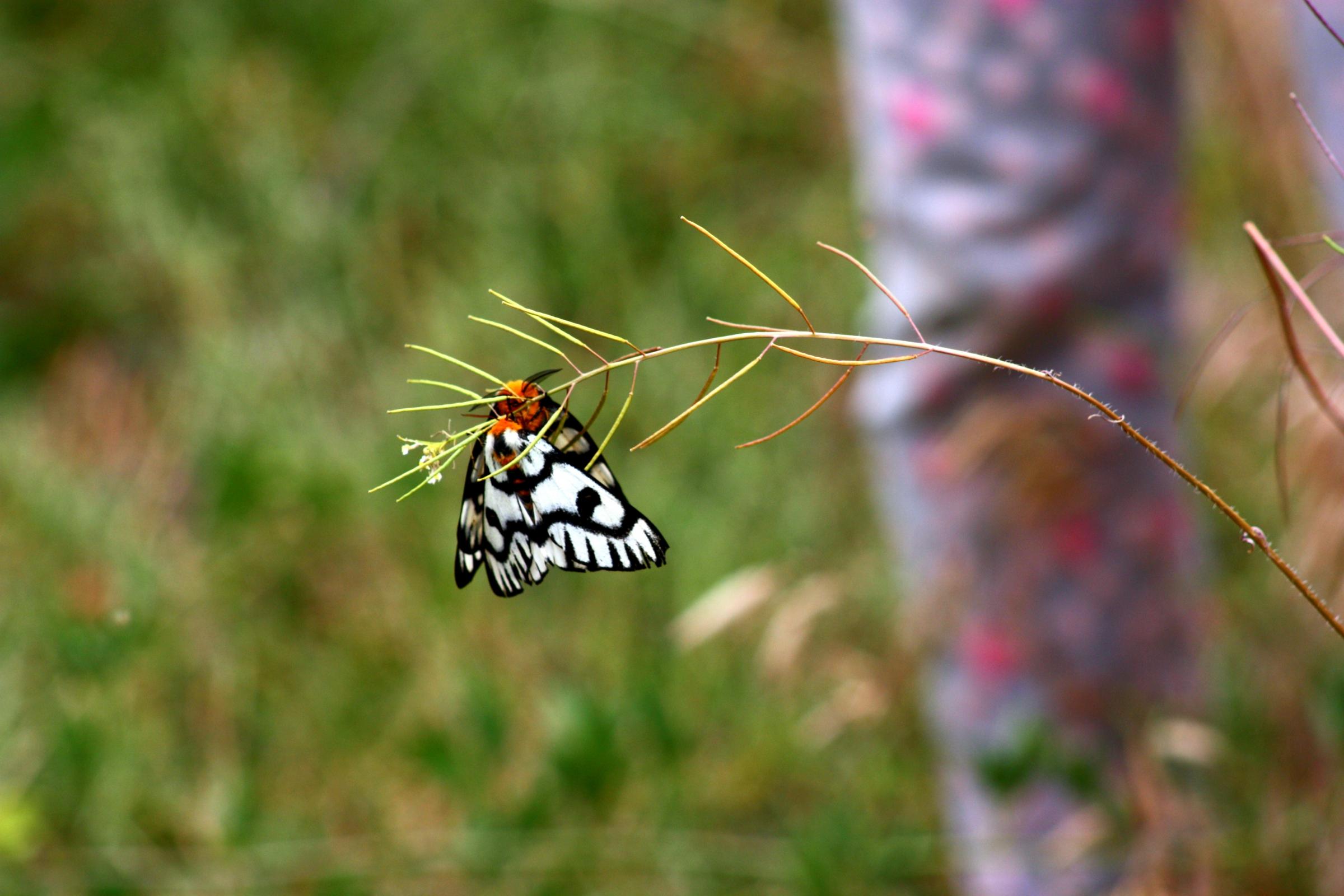 עשים מהמשפחה  Erebidae, עליהם נעשה המחקר | shutterstock
