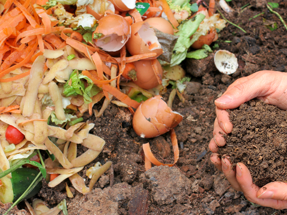 כלכלה מעגלית מבוססת על מיחזור. שימוש בקליפות תפוחי אדמה לייצור דשן אורגני, או קומפוסט   צילום: Marina Lohrbach, Shutterstock