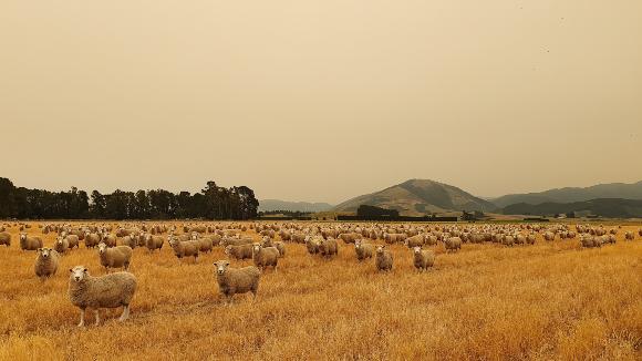 השפעות השריפה ניכרות בשמי ניו זילנד | צילום: Shutterstock