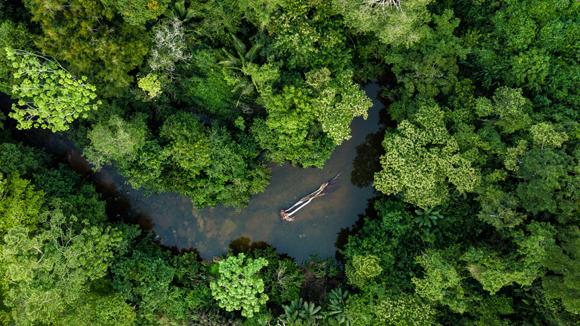 יערות הם מערכות אקולוגיות חשובות במיוחד על היבשה. יער האמזונס בפרו | צילום: qualtaghvisuals, Shutterstock