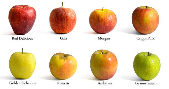 זני תפוחים שונים | Shutterstock, Jacopo ventura
