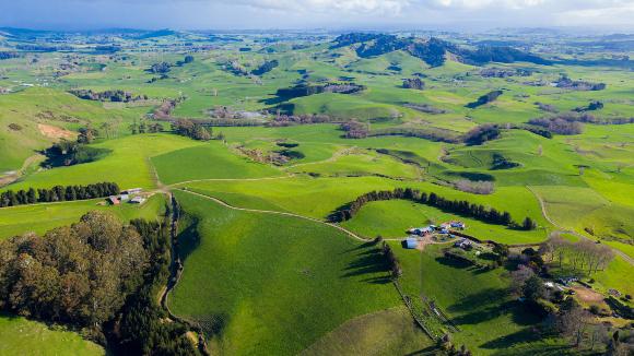 נוף כפרי בצפון ניו זילנד | צילום: Edgardo German, Shutterstock