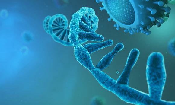 זיהוי הרצף הגנטי של הנגיף עומד בבסיס הבדיקות השונות. אילוסטרציה של מולקולת RNA ונגיף קורונה | CROCOTHERY, Shutterstock