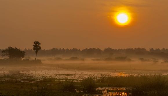 זריחה באזור ביצות   צילום: Srinivasan.Clicks, Shutterstock