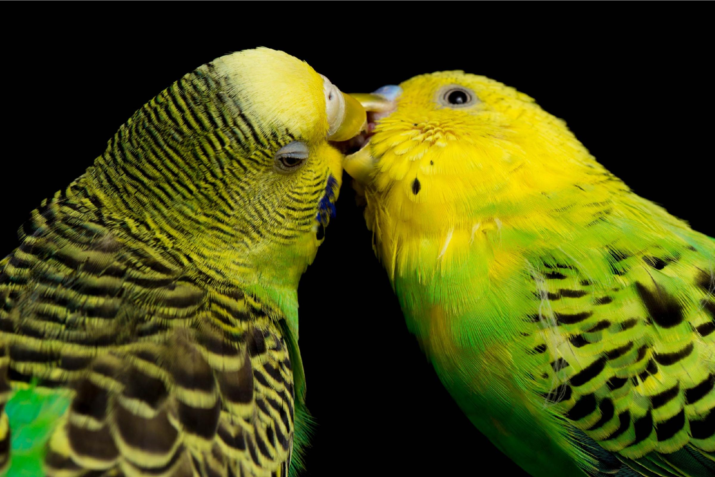 זוג תוכונים | Shutterstock, dwi putra stock
