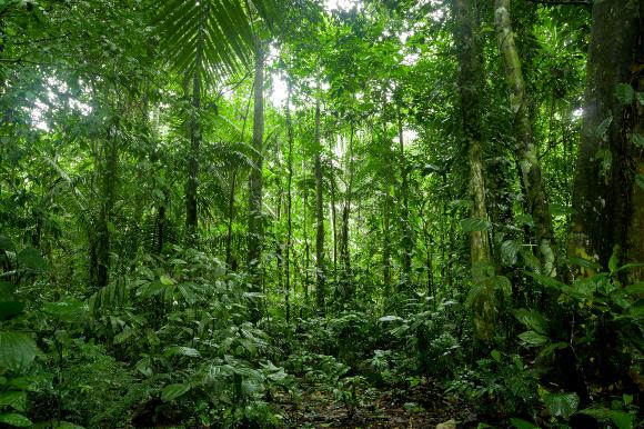 כיתוב: אזורי התפוצה של צמחים משתנים בעקבות שינויי האקלים. צמחים הגדלים בצל העצים ביער טרופי באקוודור | צילום: Fotos593, Shutterstock