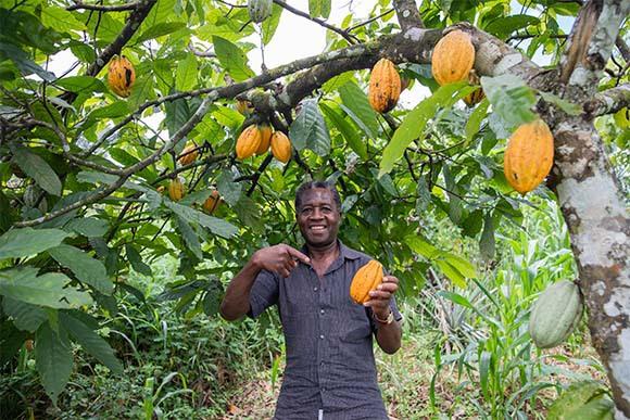 חקלאי במטע קקאו עם הפרי שגידל | צילום: matteoguedia, Shutterstock