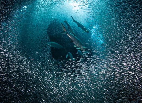 יש בערך חצי טון של דגים על כל אדם בעולם, אבל בדגי המאכל יש ירידה ניכרת | דגים ליד איי קיימן. צילום: Shutterstock