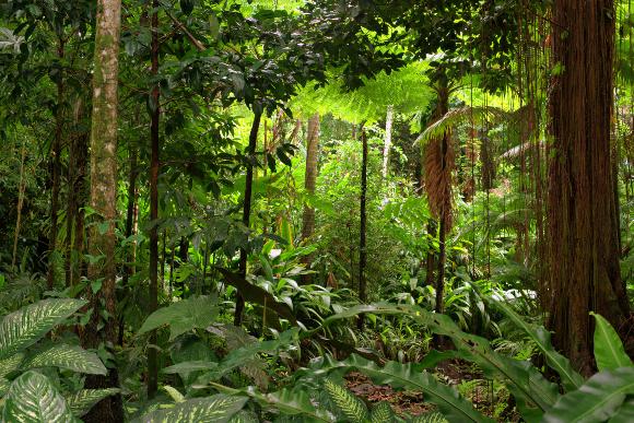 יער גשם באוסטרליה | צילום: AustralianCamera, Shutterstock