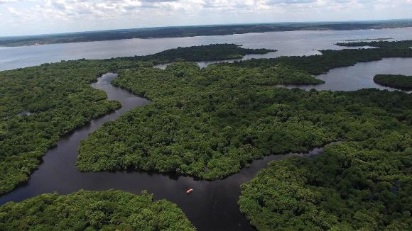 היער מאזן את האקלים, שומר על הקרקע, מייצר ענני גשם ותומך במגוון ביולוגי. אגן האמזונס | צילום: Shutterstock