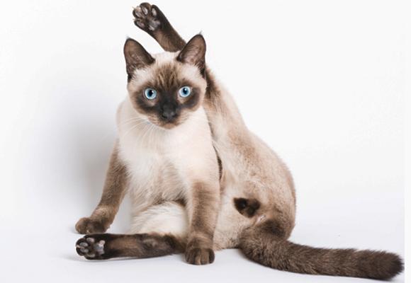 חתול מתנקה עם רגל אחת למעלה | Shutterstock, Revel Pix LLC