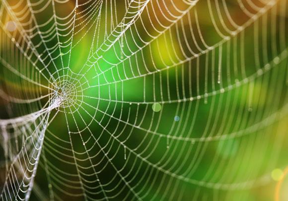 מה שטוב לעכבישים טוב לחדר האמבטיה. קורי עכביש   צילום: Shutterstock