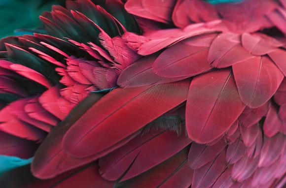 נוצות מתאר של ציפור | צילום: Worraket, Shutterstock