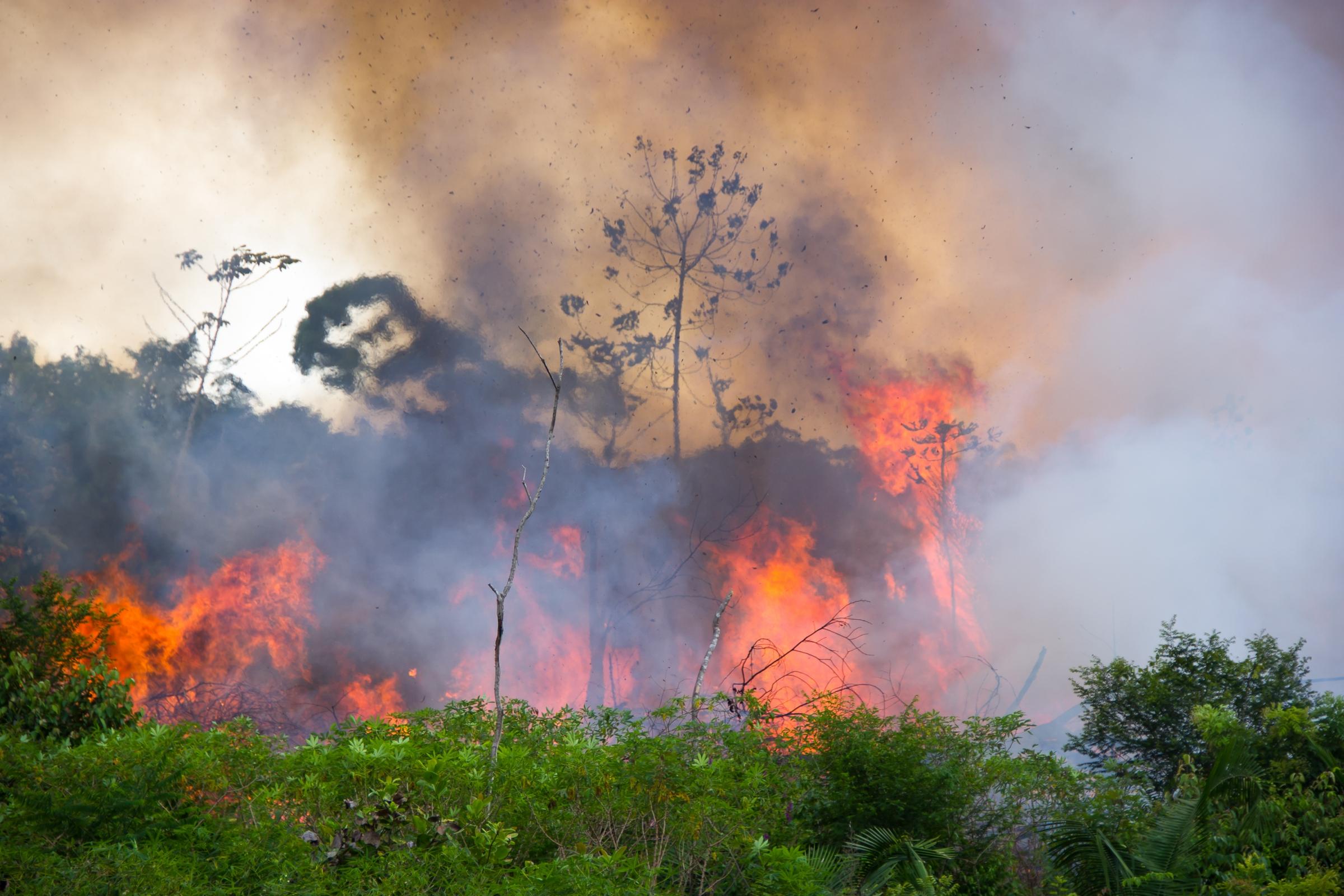 שריפה ביער האמזונס בברזיל, שאטרסטוק