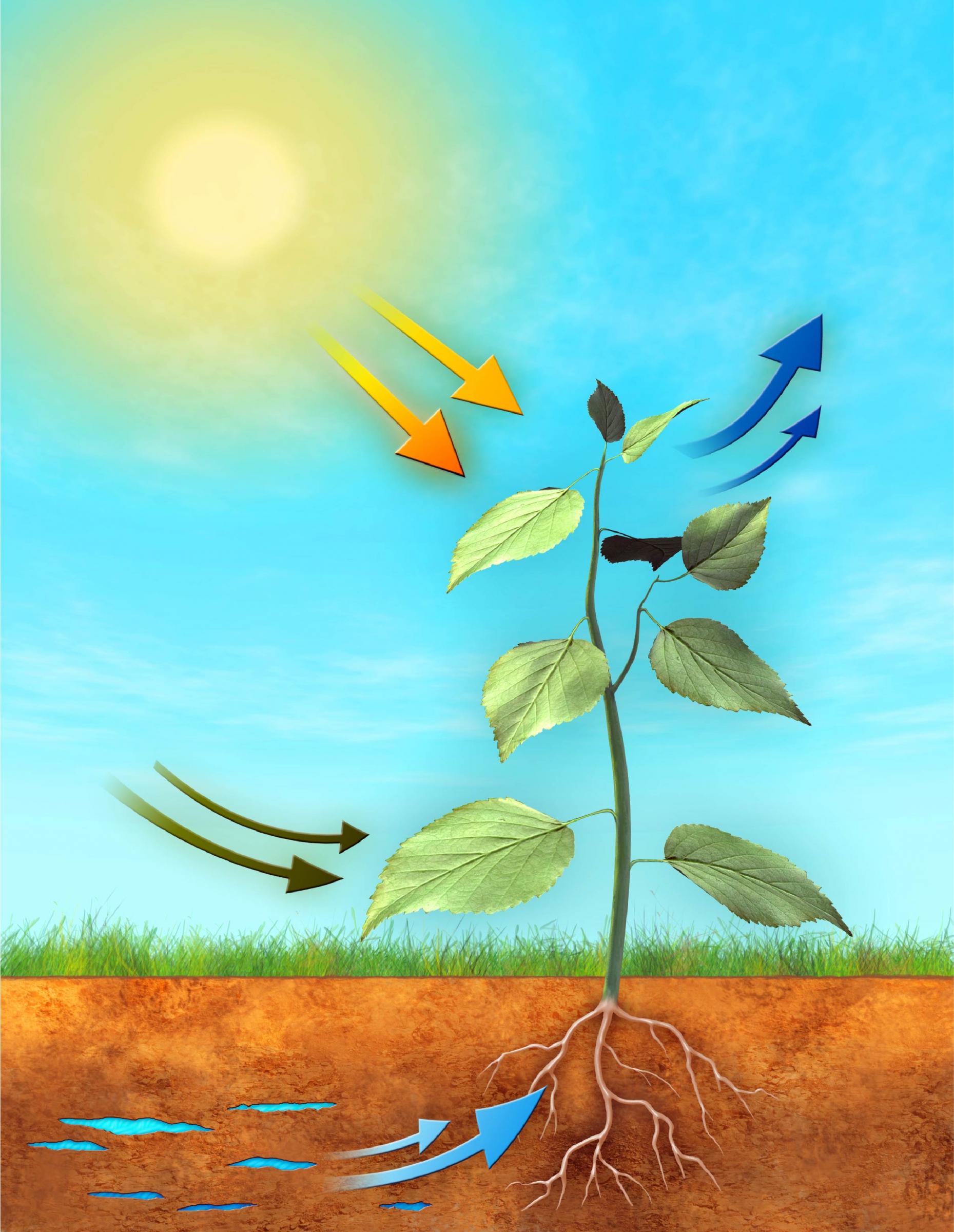 אילוסטרציה של תהליך הפוטוסינתזה, בו העצים קולטים פחמן דו חמצני ופולטים חמצן | Shutterstock, Andrea Danti