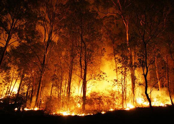 לשריפת יערות יש השלכות אקולוגיות קשות, אבל הן לא יגמרו לנו את החמצן | צילום:  Peter J. Wilson, Shutterstock