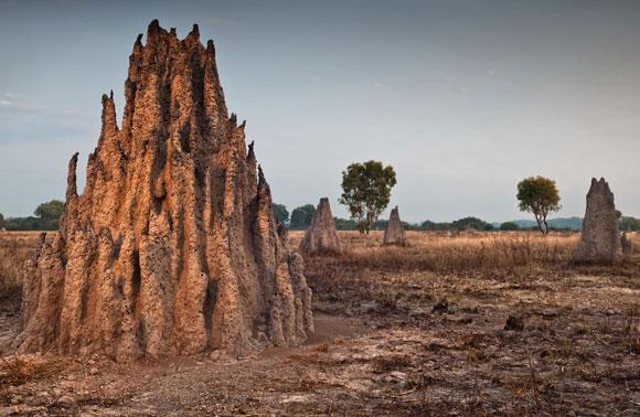 תל טרמיטים באוסטרליה | Shutterstock