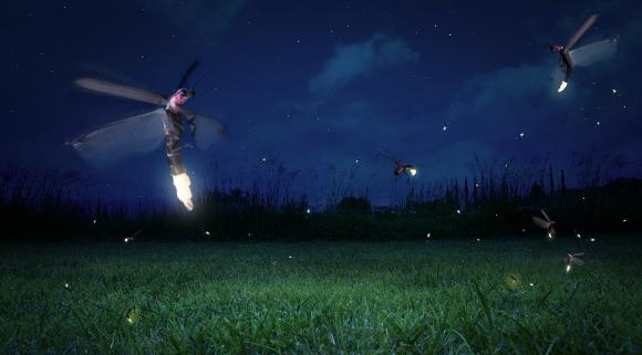 גחליליות | צילום: Subbotina Anna, Shutterstock