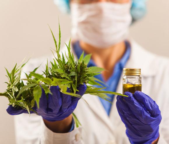 דרושים ניסויים קליניים כדי להמליץ בצורה אחראית על שימוש בקנביס כטיפול בכאבים והתמכרות. | צילום: Shutterstock
