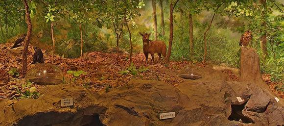 הטבע של מזרח אסיה. פוחלץ של גוראל אמור (גוראל ארוך זנב) במוזיאון | צילום מתוך אתר המוזיאון