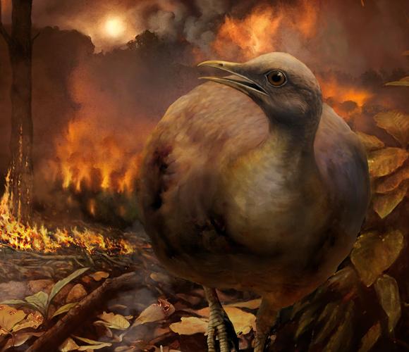 ציור דמיוני של אחת הציפורים נמלטת מפגיעת האסטרואיד | איור: Philipp M. Krzeminski, Field Museum